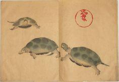 Turtles I Ogata Korin I From the Korin Album I 1802