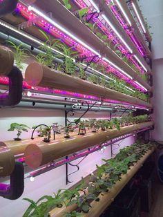 LED Grow Light Application   VANQLED GROWLIGHT   Pulse   LinkedIn