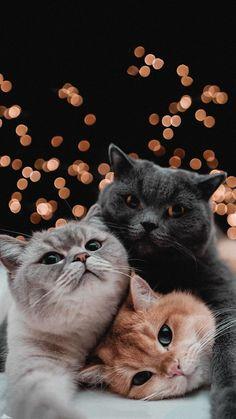 Cute Baby Cats, Cute Little Animals, Cute Cats And Kittens, Cute Funny Animals, Kittens Cutest, Wallpaper Gatos, Cute Cat Wallpaper, Animal Wallpaper, Iphone Wallpaper Cat