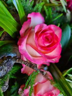 Jumilia rose Roses, Flowers, Plants, Pink, Rose, Plant, Royal Icing Flowers, Flower, Florals