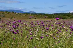 Le Causse fleuri Vineyard, Nature, Plants, Outdoor, Flowers, Floral, Tourism, Landscape, Outdoors