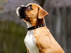 """Tener un perro evita los problemas del corazón y no estamos hablando de que te ayuda a superar desamores (aunque probablemente sí lo hagan… las mascotas son lo mejor). Investigaciones han demostrado que cuando jugamos con perros liberamos oxitocina. Esta hormona también conocida como la """"molécula del amor"""" es producida por nuestro cuerpo cuando sentimos amor o conexión, y tiene grandes beneficios para nuestra salud."""