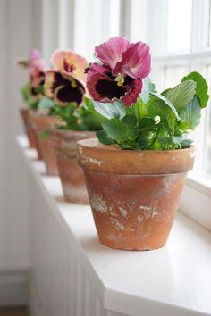 seasonsofwinterberry:  Pansies…..