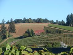 Yamhill Valley.  If you love wine, you will be in heaven!