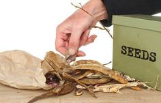 Prepare survival seeds for storage   Disaster Proof Survival Seeds And How To Store Them   https://survivallife.com/disaster-proof-survival-seeds/