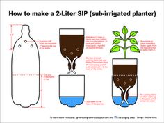 A SIP is a planter watered from the bottom... 2-liter soda bottles would be a perfect fit for my kitchen windowsill for next winter's indoor garden.  Just have to make a slip over cover to make them all pretty.