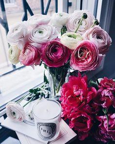 What Is Tumblr, Ranunculus, Trending Topics, Flower Power, Floral Wreath, Seaside, Tea, Table Decorations, Rose