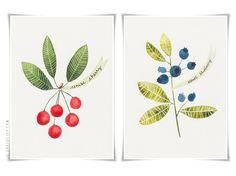 watercolour blue berries - Google Search