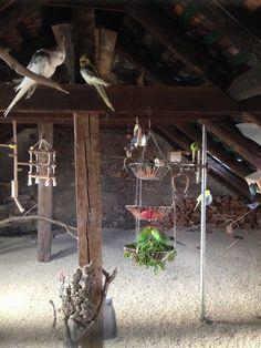 Vogelzucht Krummschnäbel in Karlsruhe | Wellensittich Infoportal
