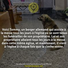 Fact Quotes, True Quotes, Happy Stories, Bully Dog, Real Facts, French Quotes, Faith In Humanity, Worlds Of Fun, Make You Smile