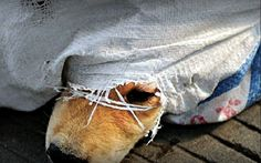 End this now! #StopYulin2015