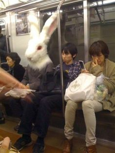 if you pick your nose on the subway giant rabbits will appear