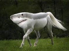 Afbeeldingsresultaat voor combination animals