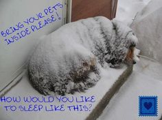 Please share this image. No animal should be left in this snow storm to fend for themselves.
