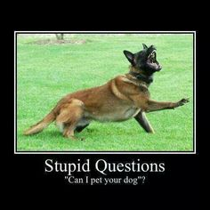 """Malinois funny From your friends at phoenix dog in home dog training""""k9katelynn"""" see more about Scottsdale dog training at k9katelynn.com! Pinterest with over 18,600 followers! Google plus with over 120,000 views! You tube with over 400 videos and 50,000 views!! Serving the valley for 11 plus years"""
