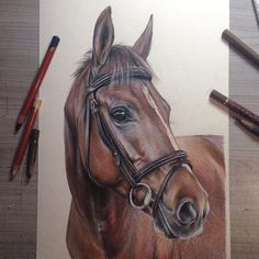 He's ready! Sweet boy   @_re.boot__ •  •  •  #taisiiart #horse #art #artist #arthelp #paint #young_artists_help #horseportrait #realism #horse_of_instagram #draw #drawing #horsedrawing #horseart #kaliningrad  #realisticdrawing #fabercastell #colorpencil #derwent #equestrian #equineart #equestriansofinstagram #powerofartists #pencilart #animalcreatives #feature #sharemearts #pencilsacademy @powerofartists @pencils.academy @artist_museum @artsupporters @artastic_feature