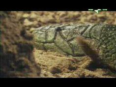 Storia della Terra ed Evoluzione della Vita