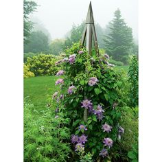 Clematis Crystal Fountain™ Regal®