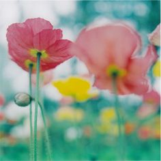 poppies...oh they make me smile~