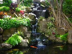pond with koi and waterfall