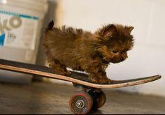 """""""I can do it!!--I can do it""""!!-sooo cute ♥  _______________________________ Bark N Babies Grooming  8134 E Indian School Rd, Scottsdale, Arizona 85251 (480) 860-2224"""