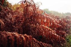 Snippets of autumn - Searching For Tomorrow - A Photographic Diary by Kitty and Nathan