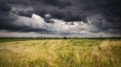 Gewitterwolken-Aufziehende Gewitterwolken über einem Getreidefeld: Mit jedem gestreutem Photon, vermindert sich die Intensität des direkten Lichts. Je dicker die Wolke, desto weniger Restlicht kommt auf der Erde an und die Wolken erscheinen bedrohlich dunkel.