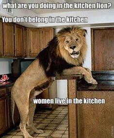 Funniest Lion Quotes