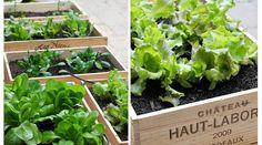 11 vegetales que puedes comer y volver a crecer de nuevo - Vida Lúcida