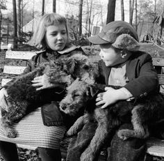 Children with airedale puppies. c. 1950