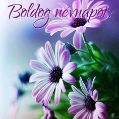 Happy Birthday Pictures, Name Day, Romantic Night, Gerbera, Birthday Wishes, Tea Party, Beautiful Flowers, Recycling, About Me Blog