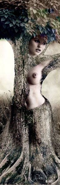 'Die Seele des Baumes - The spirit of the tree' by Harald Fischer