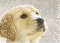 Christmas card featuring a dog in the snow, sent to a Postcrosser in Ukraine who likes dogs.