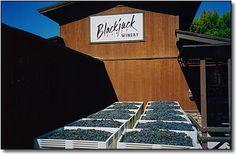 Blackjack Ranch