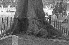The Hungry Tree by ratravarman.deviantart.com on @deviantART