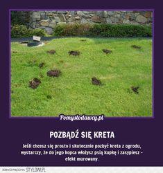 PROSTY TRIK NA POZBYCIE SIĘ KRETA Z OGRODU, KTÓRY CIĘ Z… na Stylowi.pl