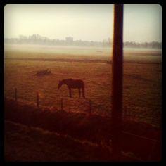 Nog meer ochtendgloren (Taken with instagram)