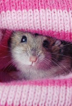My Cute little Russian dwarf hamster - #hamsters #hamster
