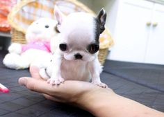 Baby Pebbles ~ SO CUTE!