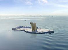 2080: Polar bears face extinction