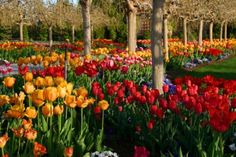 Holland, Michigan during the Tulip Festival...I loved all the tulips and the traditional street scrubbing!