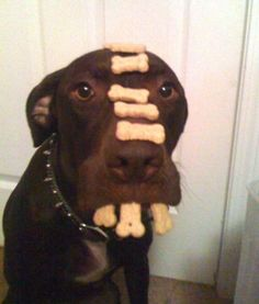 Funny pictures about Advanced self-control. Oh, and cool pics about Advanced self-control. Also, Advanced self-control. Love My Dog, Puppy Love, Animal Memes, Funny Animals, Cute Animals, Funny Animal Sayings, Hilarious Sayings, Animal Funnies, Funny Horses