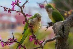 Fotó Parrot, Birds, Animals, Parrot Bird, Animales, Animaux, Bird, Animal, Animais