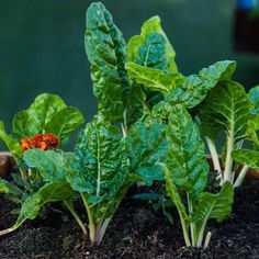 If you've never grown your own veggies before, now's the time to start. It's cost effective, incredibly rewarding to see the fruits of your labour, and there are few things...  Read More