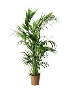 Planters, Lily, Plant, Window Boxes, Pot Holders, Flower Planters, Pots
