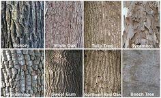 Michigan+Tree+Identification+by+Leaf Identify Trees By