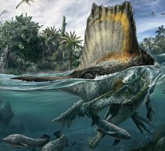 """Spinosaurus(""""spined lizard"""") is a genus theropod that existed in what is now North Africa, from the Albian to early Cenomanian stages of the Cretaceous Period, about 112 to 97 million years ago. According to recent estimates, Spinosaurusmay be the largest of all theropods, possibly even larger than Tyrannosaurus,Giganotosaurusand Carcharodontosaurus. These estimates suggest that it was around12.6 to 18 meters in length (41 to 59 feet) and between 7 and 9 -12 tons in weight. This…"""