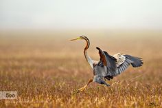 The smooth landing! by poornakedar. Please Like http://fb.me/go4photos and Follow @go4fotos Thank You. :-)