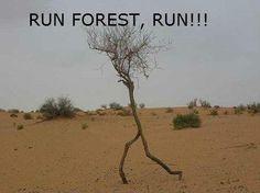 Run Forest Run. Forest gump