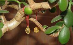 Как вырастить денежное дерево и привлечь в дом богатство